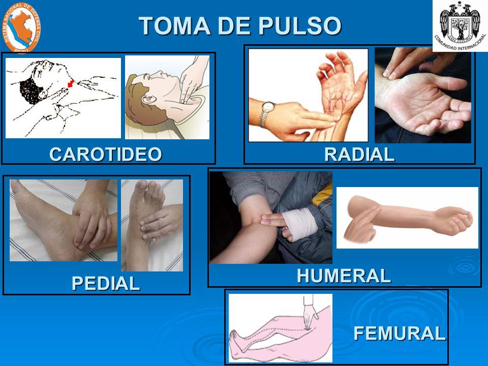 TOMA DE PULSO CAROTIDEORADIAL PEDIAL HUMERAL FEMURAL