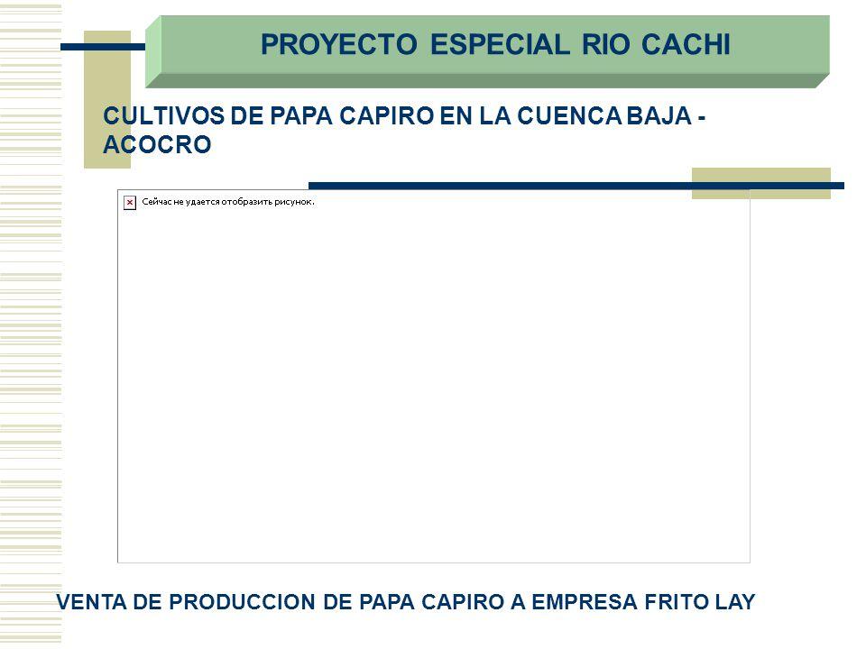 CULTIVOS DE PAPA CAPIRO EN LA CUENCA BAJA - ACOCRO VENTA DE PRODUCCION DE PAPA CAPIRO A EMPRESA FRITO LAY PROYECTO ESPECIAL RIO CACHI