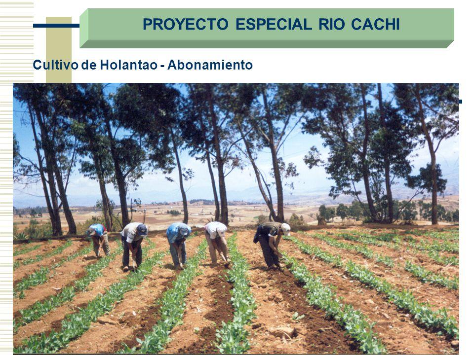 Cultivo de Holantao - Abonamiento PROYECTO ESPECIAL RIO CACHI