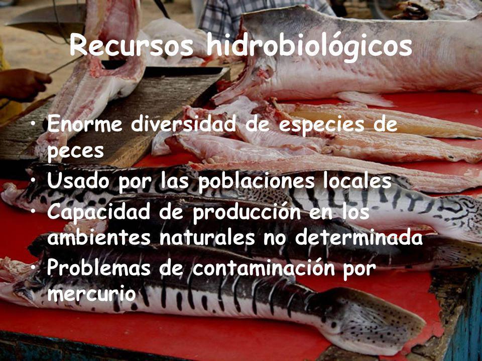 Recursos hidrobiológicos Enorme diversidad de especies de peces Usado por las poblaciones locales Capacidad de producción en los ambientes naturales no determinada Problemas de contaminación por mercurio