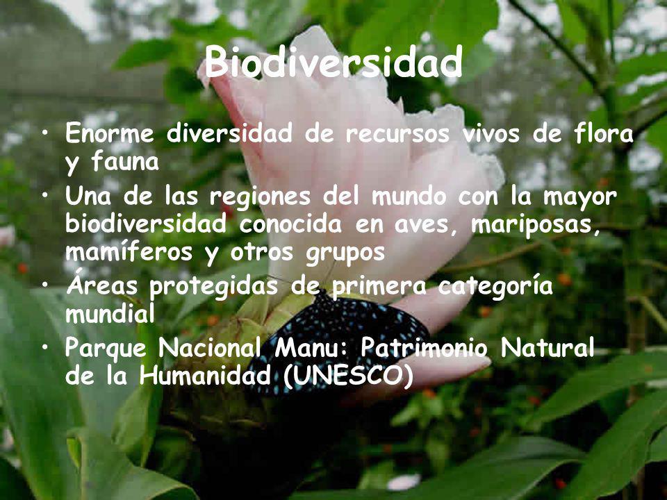 Biodiversidad Enorme diversidad de recursos vivos de flora y fauna Una de las regiones del mundo con la mayor biodiversidad conocida en aves, mariposas, mamíferos y otros grupos Áreas protegidas de primera categoría mundial Parque Nacional Manu: Patrimonio Natural de la Humanidad (UNESCO)