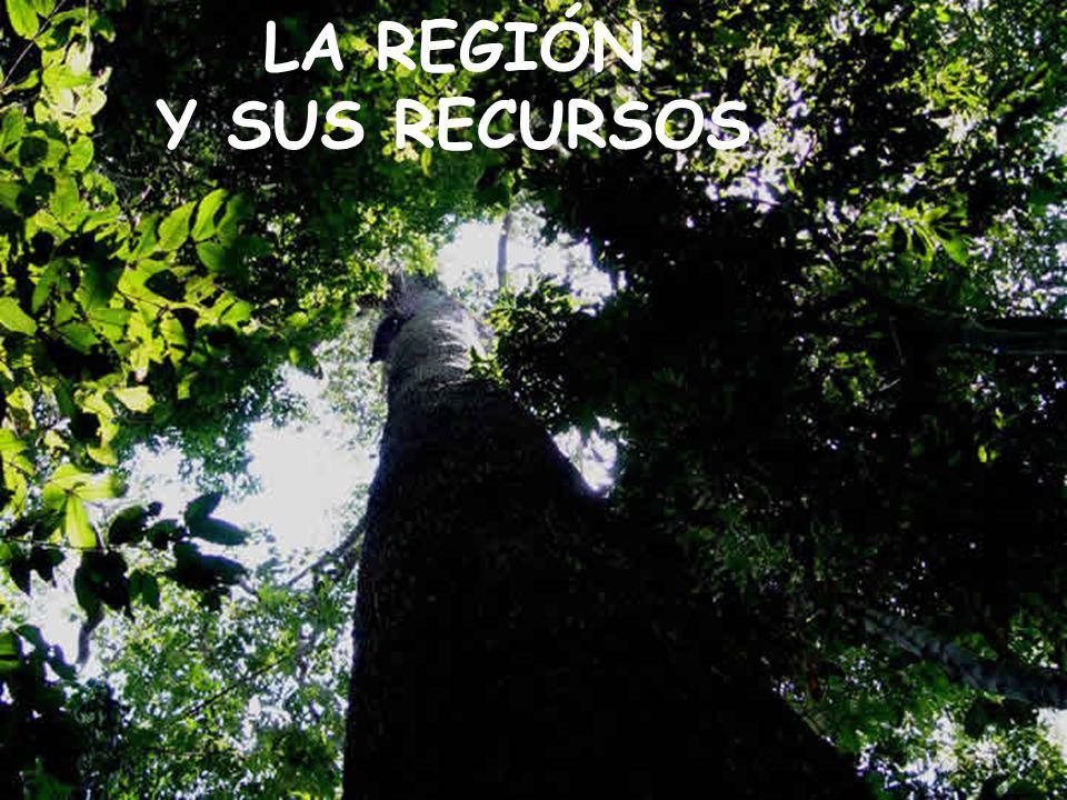 UN ENORME ESPACIO Superficie: 7 840 271 ha Más grande que Panamá 1,5 veces Costa Rica Encierra una enorme posibilidad para generar riqueza en forma sostenida para generar bienestar para su población