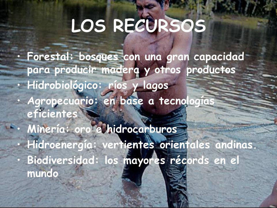 LOS RECURSOS Forestal: bosques con una gran capacidad para producir madera y otros productos Hidrobiológico: ríos y lagos Agropecuario: en base a tecnologías eficientes Minería: oro e hidrocarburos Hidroenergía: vertientes orientales andinas.