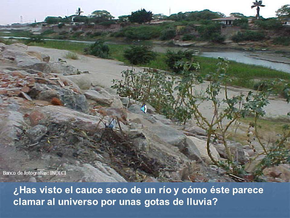 ¿Has visto el cauce seco de un río y cómo éste parece clamar al universo por unas gotas de lluvia.