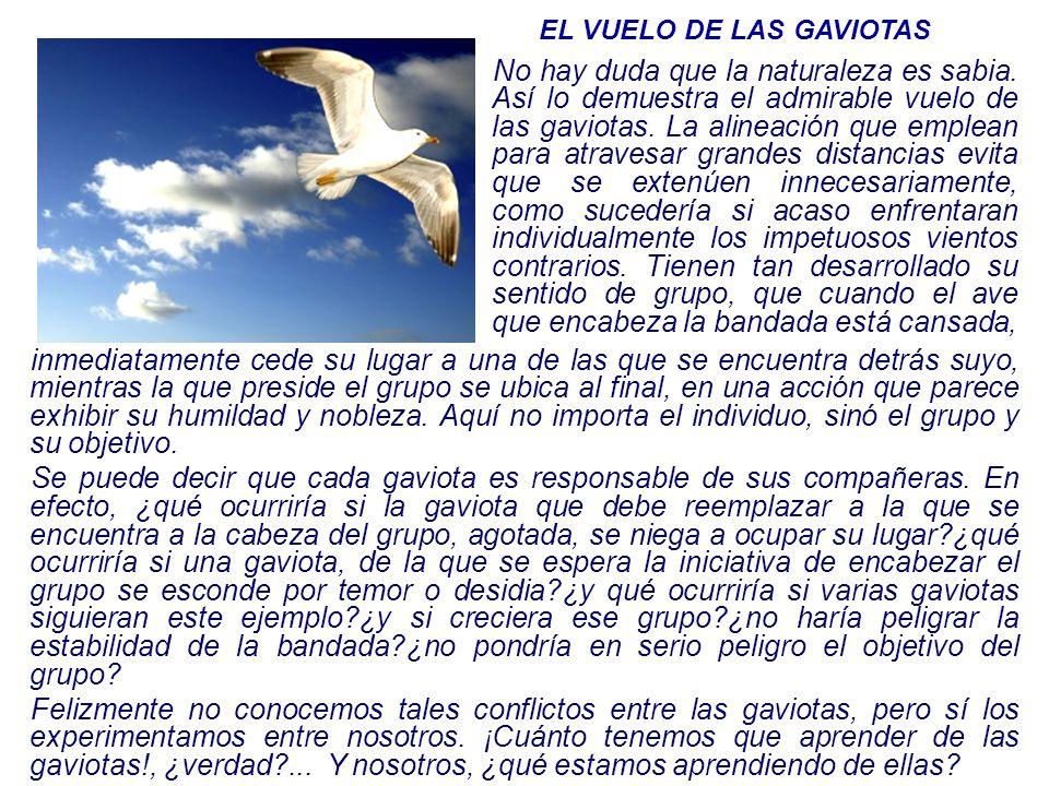 EL VUELO DE LAS GAVIOTAS No hay duda que la naturaleza es sabia. Así lo demuestra el admirable vuelo de las gaviotas. La alineación que emplean para a