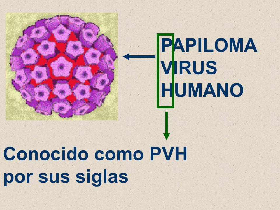QUIEN PRODUCE EL CÁNCER DEL CUELLO DEL ÚTERO? UN VIRUS… PAPILOMA VIRUS HUMANO LLAMADO