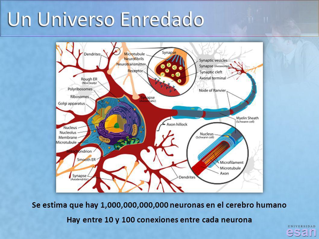 Un Universo Enredado Se estima que hay 1,000,000,000,000 neuronas en el cerebro humano Hay entre 10 y 100 conexiones entre cada neurona