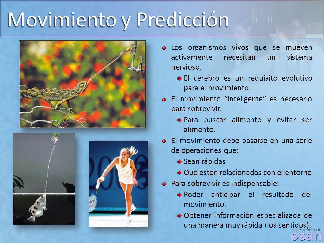 Movimiento y Predicción Los organismos vivos que se mueven activamente necesitan un sistema nervioso. El cerebro es un requisito evolutivo para el mov