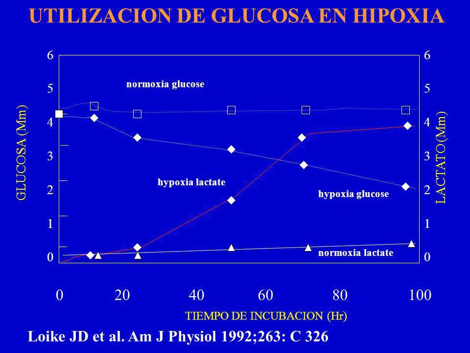 65432106543210 GLUCOSA (Mm) 010080402060 LACTATO (Mm) TIEMPO DE INCUBACION (Hr) normoxia lactate hypoxia glucose hypoxia lactate 65432106543210 normoxia glucose Loike JD et al.