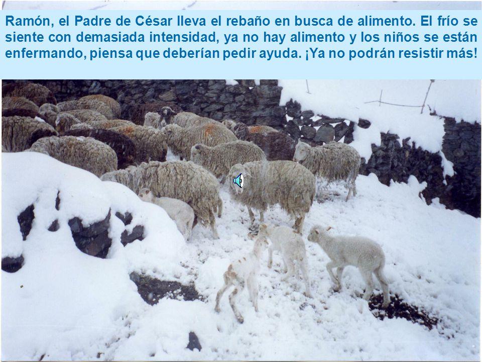 Ramón, el Padre de César lleva el rebaño en busca de alimento.