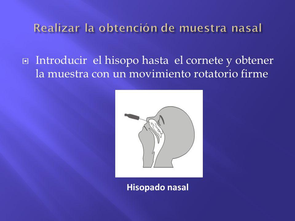 Introducir el hisopo hasta el cornete y obtener la muestra con un movimiento rotatorio firme Hisopado nasal