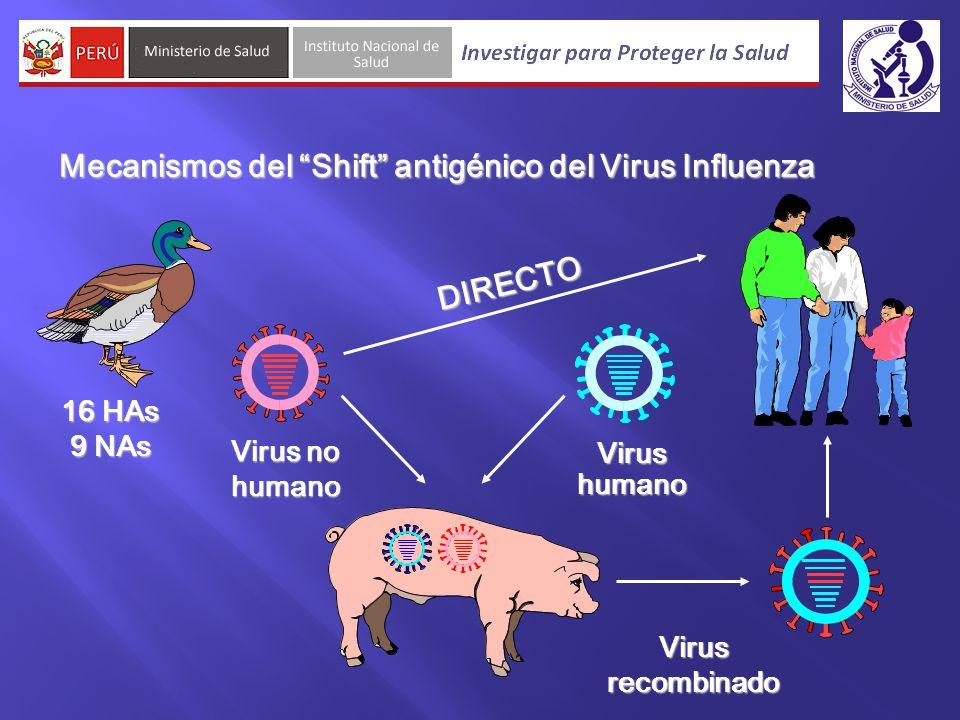 Virus humano Virus recombinado Virus no humano 16 HAs 9 NAs DIRECTO Mecanismos del Shift antigénico del Virus Influenza