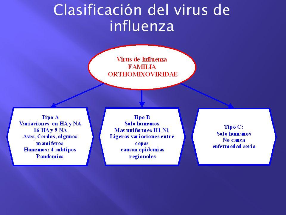 ¿Qué es la influenza porcina.