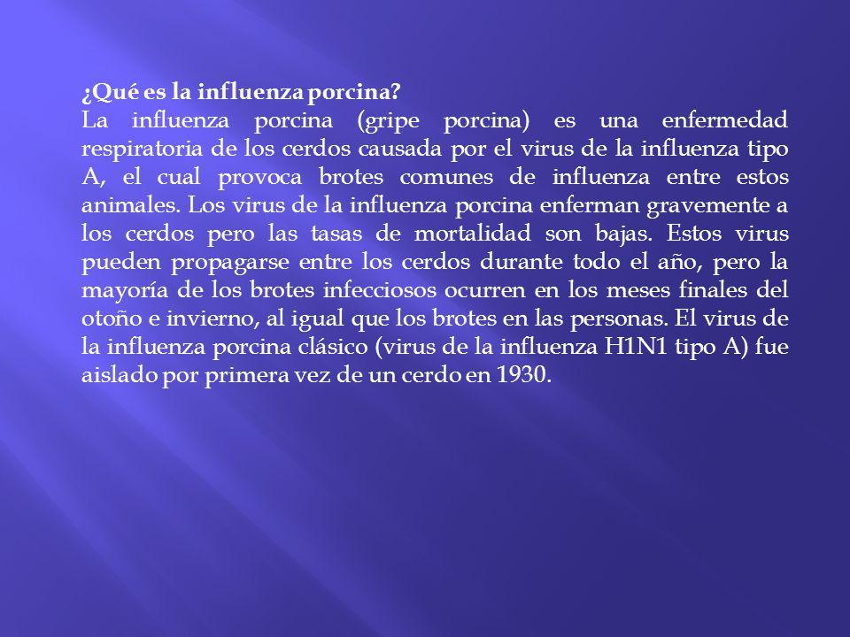 ¿Qué es la influenza porcina? La influenza porcina (gripe porcina) es una enfermedad respiratoria de los cerdos causada por el virus de la influenza t
