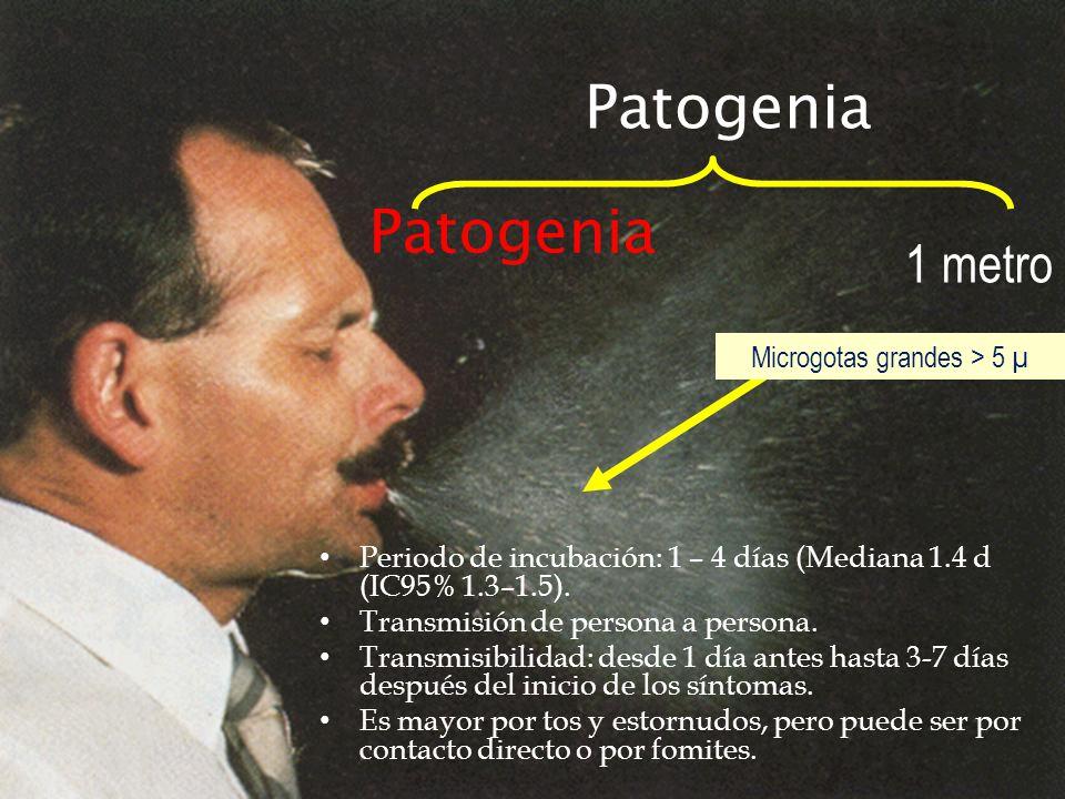 Microgotas grandes > 5 µ Patogenia Periodo de incubación: 1 – 4 días (Mediana 1.4 d (IC95% 1.3–1.5). Transmisión de persona a persona. Transmisibilida