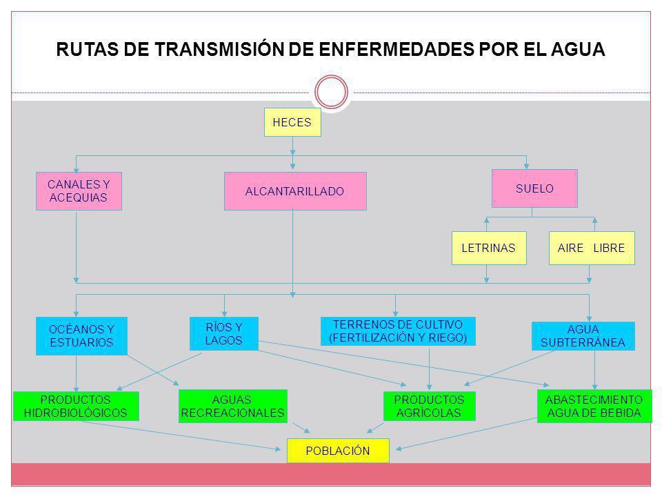 RUTAS DE TRANSMISIÓN DE ENFERMEDADES POR EL AGUA PRODUCTOS HIDROBIOLÓGICOS AGUAS RECREACIONALES PRODUCTOS AGRÍCOLAS ABASTECIMIENTO AGUA DE BEBIDA HECES CANALES Y ACEQUIAS ALCANTARILLADO SUELO LETRINASAIRE LIBRE OCÉANOS Y ESTUARIOS RÍOS Y LAGOS TERRENOS DE CULTIVO (FERTILIZACIÓN Y RIEGO) AGUA SUBTERRÁNEA POBLACIÓN