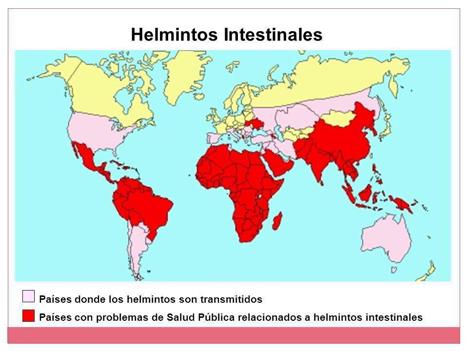 Helmintos Intestinales Países con problemas de Salud Pública relacionados a helmintos intestinales Países donde los helmintos son transmitidos