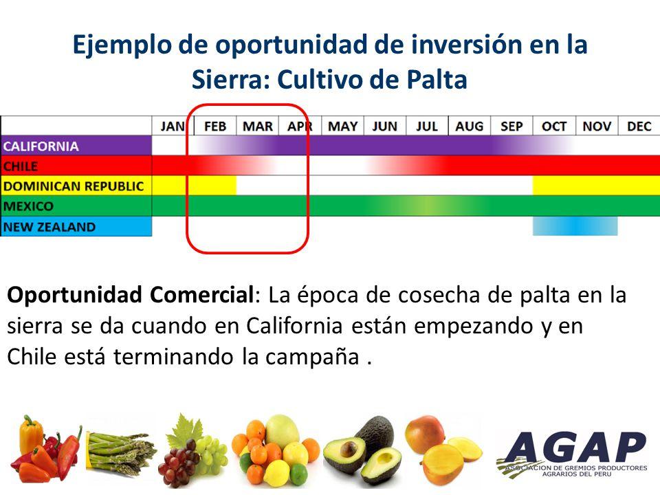 Ejemplo de oportunidad de inversión en la Sierra: Cultivo de Palta Oportunidad Comercial: La época de cosecha de palta en la sierra se da cuando en California están empezando y en Chile está terminando la campaña.