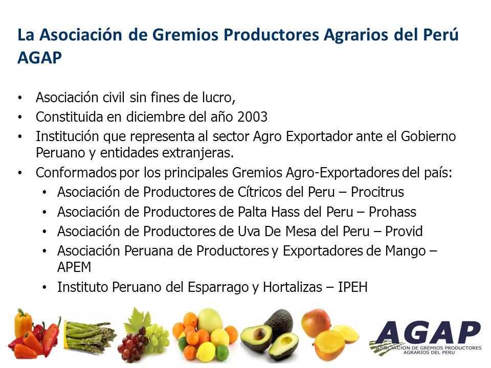 Ejemplo de oportunidad de inversión en la Sierra: Cultivo de Palta Palta Hass: Goza de alta demanda en países de América y Europa.