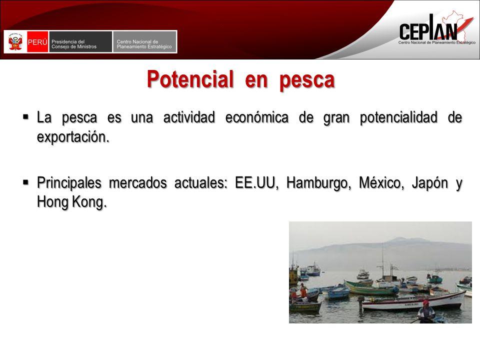 Potencial en pesca La pesca es una actividad económica de gran potencialidad de exportación.