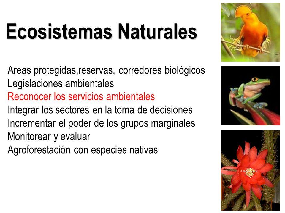 Areas protegidas,reservas, corredores biológicos Legislaciones ambientales Reconocer los servicios ambientales Integrar los sectores en la toma de decisiones Incrementar el poder de los grupos marginales Monitorear y evaluar Agroforestación con especies nativas Ecosistemas Naturales
