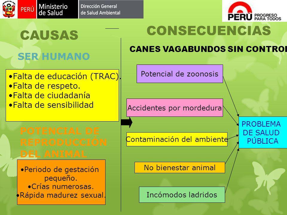 SER HUMANO POTENCIAL DE REPRODUCCIÓN DEL ANIMAL CAUSAS Falta de educación (TRAC). Falta de respeto. Falta de ciudadanía Falta de sensibilidad Periodo