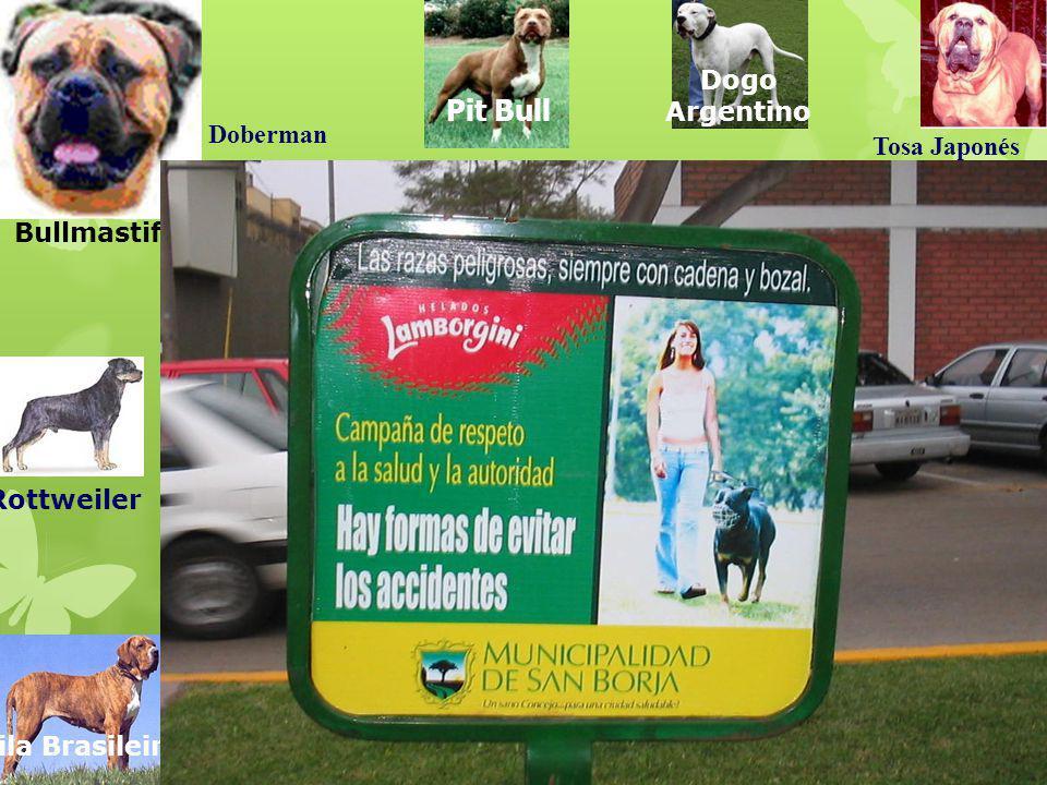 Rottweiler Doberman Bullmastiff Dogo Argentino Tosa Japonés Fila Brasileiro Pit Bull