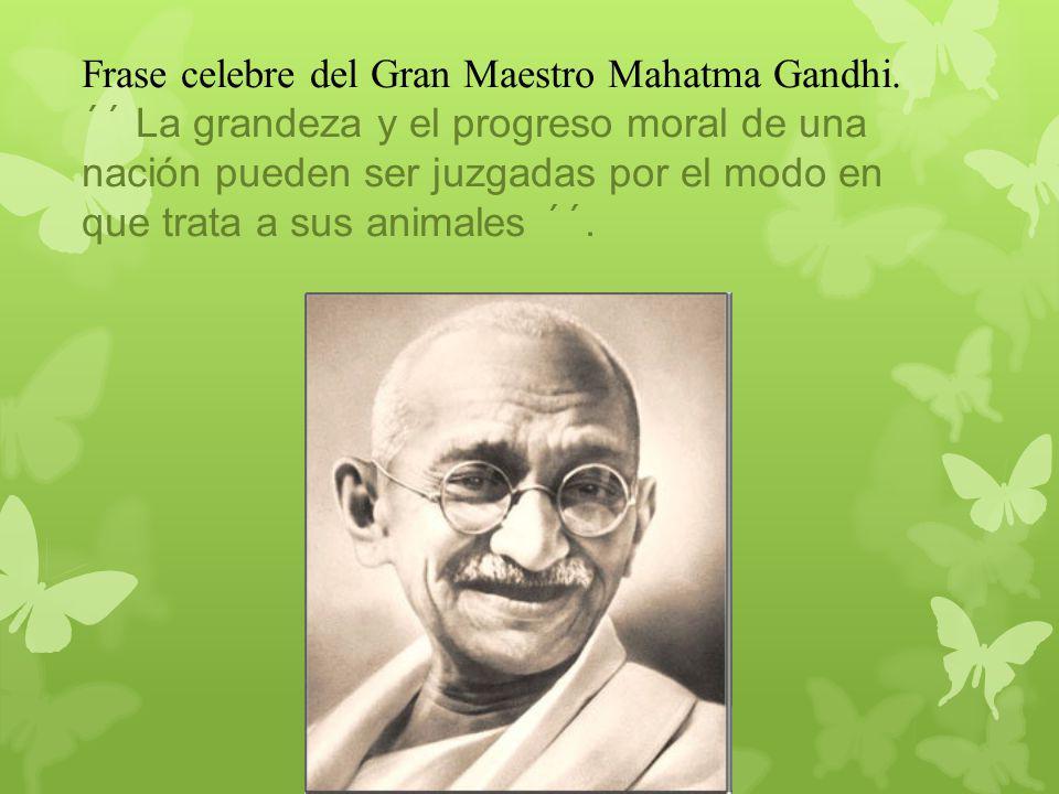 Frase celebre del Gran Maestro Mahatma Gandhi. ´´ La grandeza y el progreso moral de una nación pueden ser juzgadas por el modo en que trata a sus ani