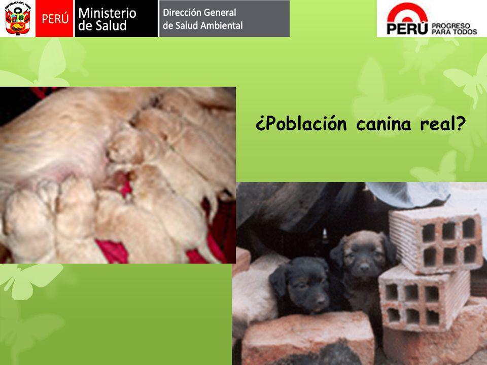 ¿Población canina real?