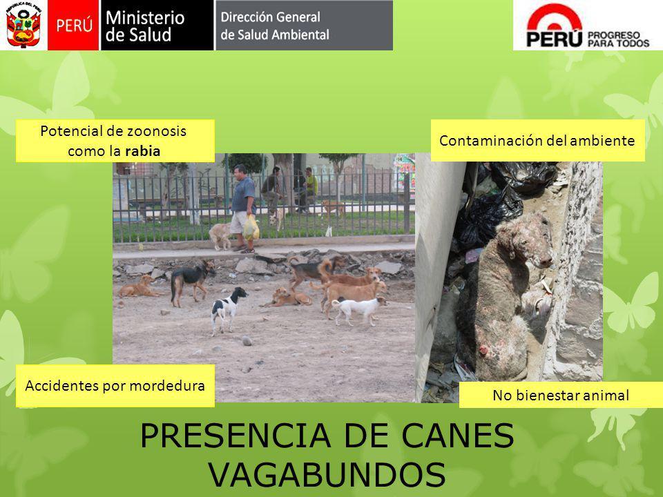 PRESENCIA DE CANES VAGABUNDOS Potencial de zoonosis como la rabia Contaminación del ambiente Accidentes por mordedura No bienestar animal