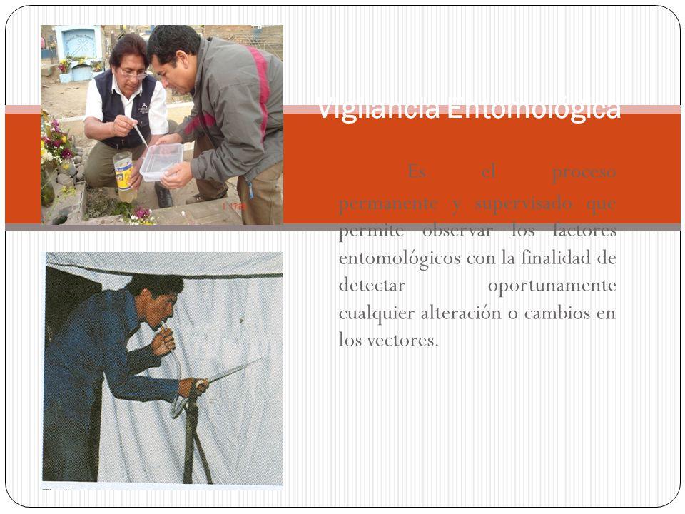 Principales Enfermedades Transmitidas por Vectores en el Perú ENFERMEDADVECTORAGENTE MalariaAnophelesPlasmodium Fiebre AmarillaAedes, HaemagogusVirus DengueAedesVirus LeishmaniasisLutzomyiaLeishmania BartonellosisLutzomyia Bartonelle baciliformis Enf.