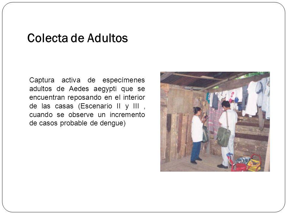Colecta de Adultos Captura activa de especímenes adultos de Aedes aegypti que se encuentran reposando en el interior de las casas (Escenario II y III, cuando se observe un incremento de casos probable de dengue)
