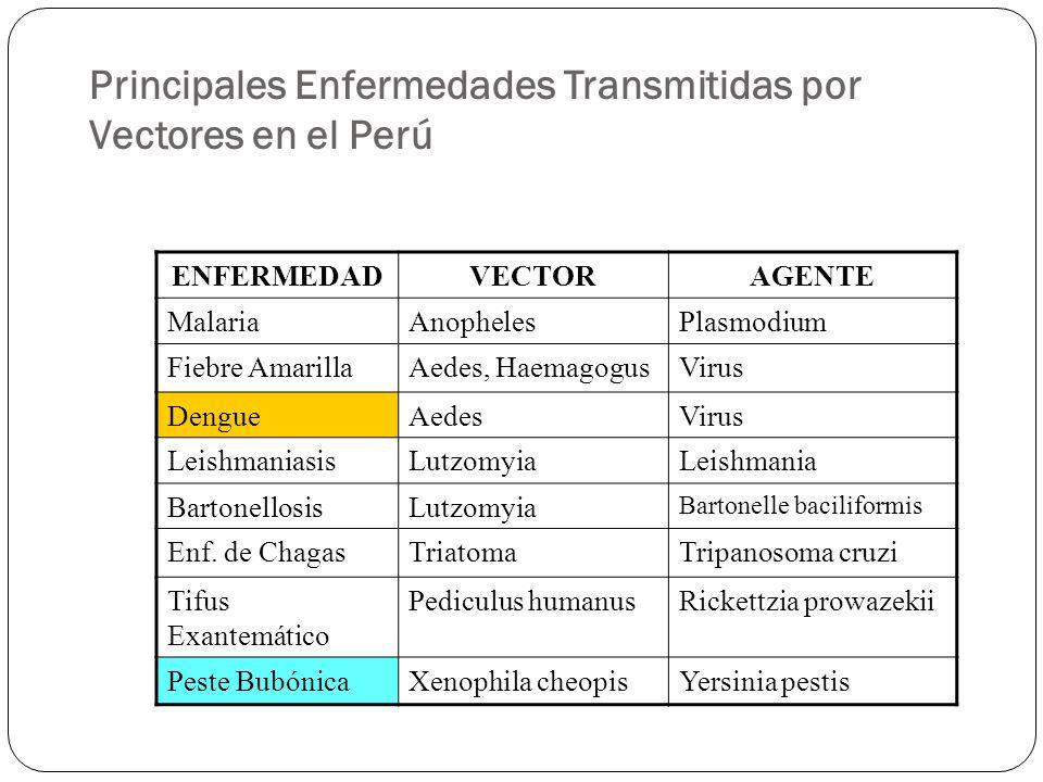 Diagnóstico de las Muestras Las muestras deberán llegar al Laboratorio de Entomología de la DISA IV Lima Este, el cual serán diagnosticadas por el personal de salud responsable.