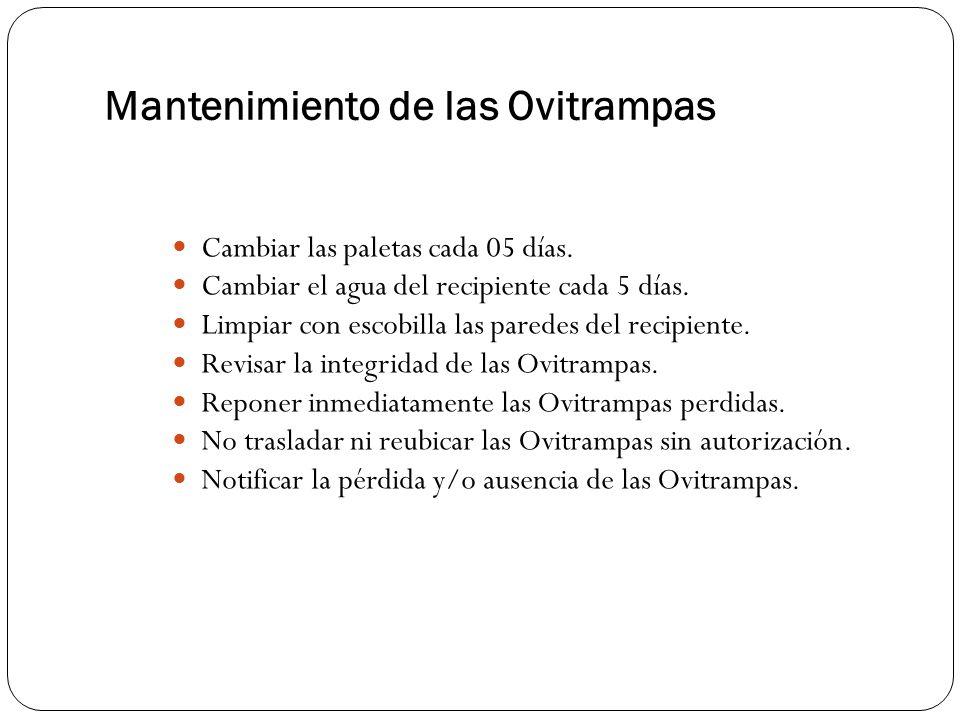 Mantenimiento de las Ovitrampas Cambiar las paletas cada 05 días.