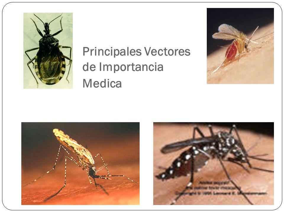 Disminuir la Incidencia de la Morbi- mortalidad de las Enfermedades Transmitidas por Insectos Vectores Fin de la Vigilancia Entomológica