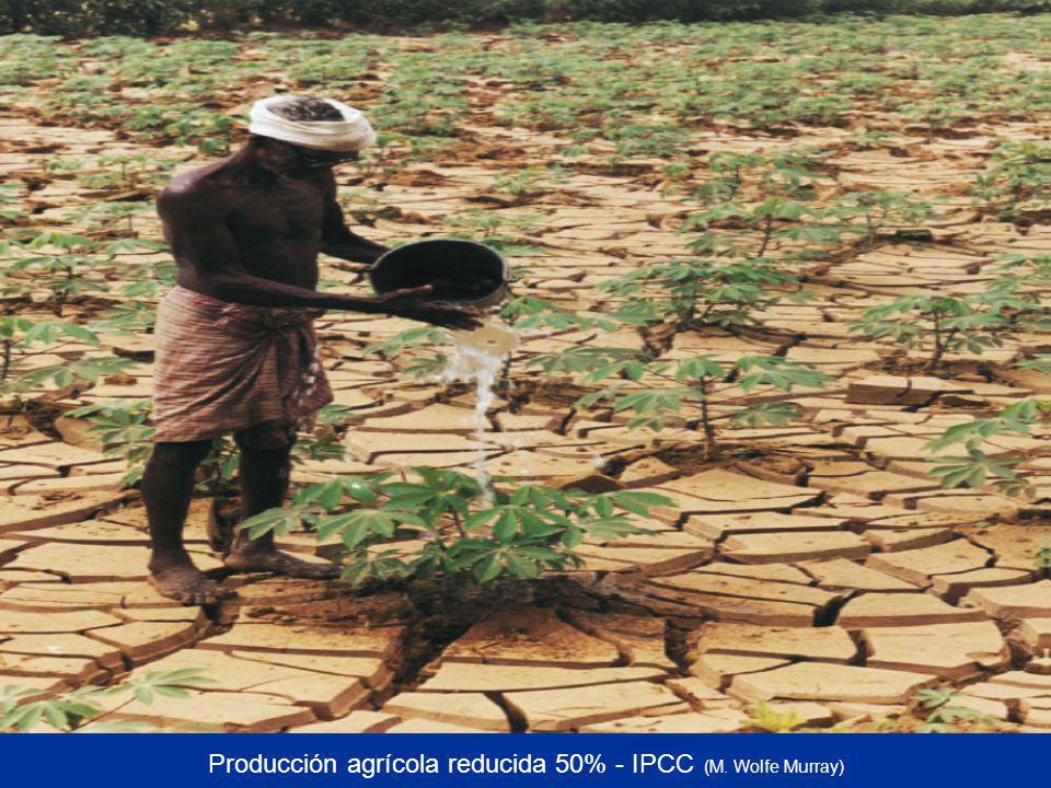 Producción agrícola reducida 50% - IPCC (M. Wolfe Murray)