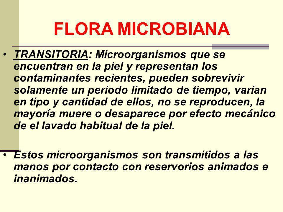 FLORA MICROBIANA TRANSITORIA: Microorganismos que se encuentran en la piel y representan los contaminantes recientes, pueden sobrevivir solamente un p