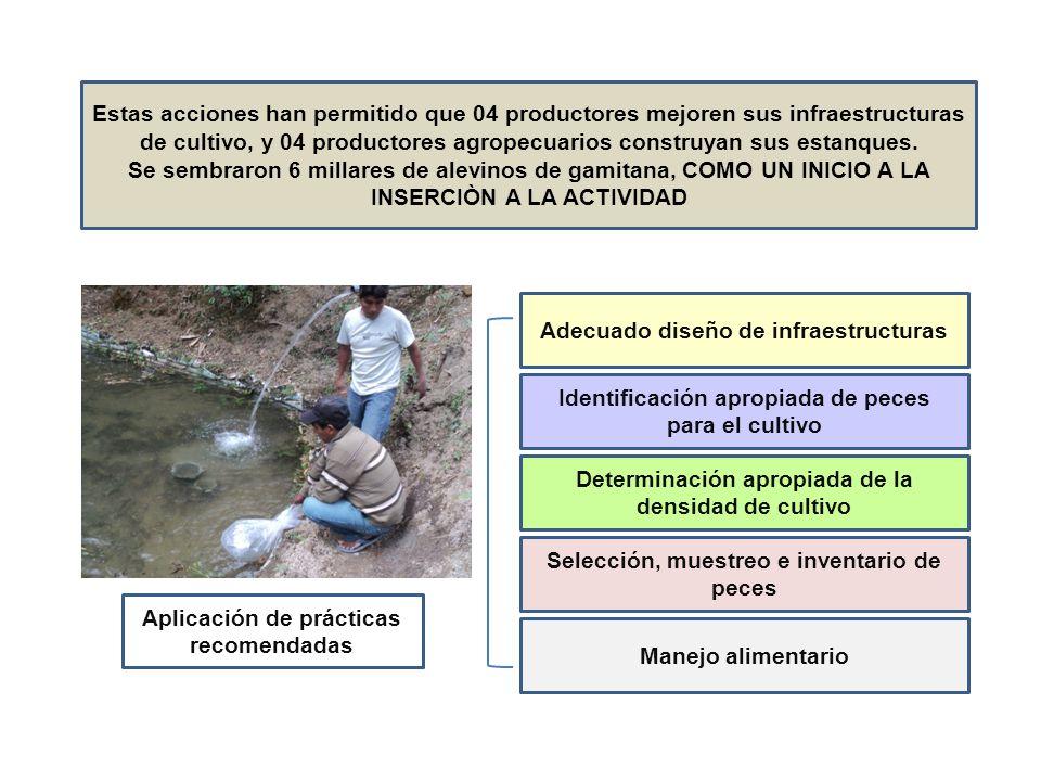 Estas acciones han permitido que 04 productores mejoren sus infraestructuras de cultivo, y 04 productores agropecuarios construyan sus estanques. Se s