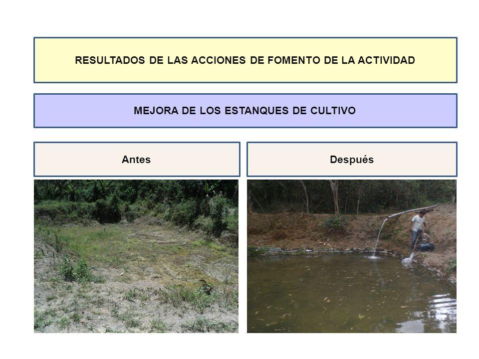INSERCIÓN INICIAL EN LA ACTIVIDAD SIEMBRA DE ALEVINOS DE GAMITANAS PROCEDENTES DE LA REGIÓN DE MADRE DE DIOS