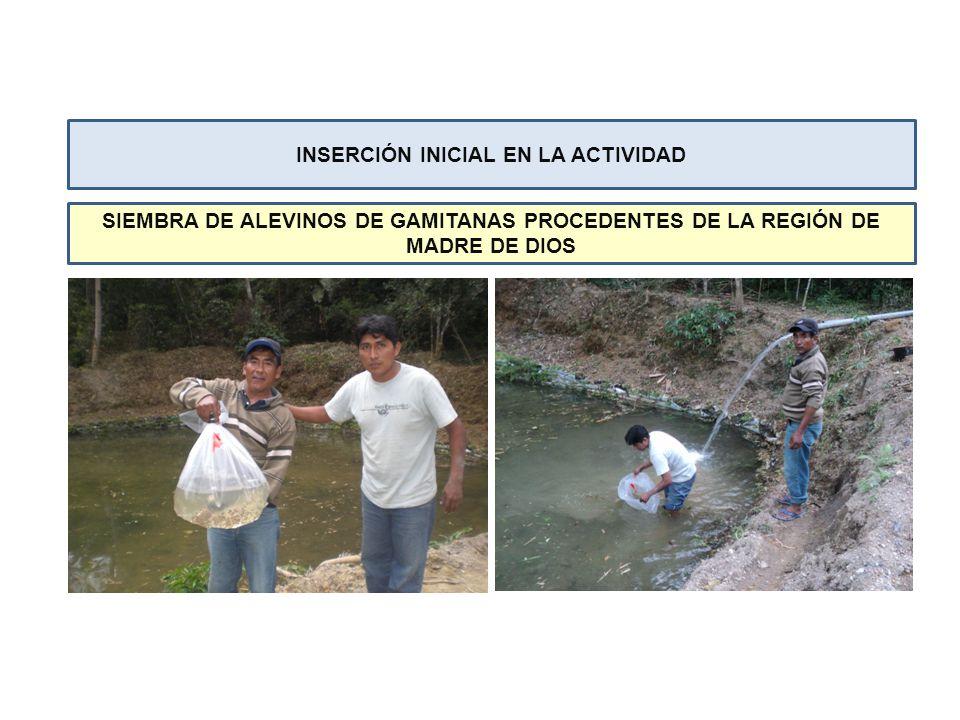 Involucramiento de los Gobiernos Locales para la promoción de la acuicultura en la zona, así como también de entidades privadas como la Central de Cooperativas del Valle de Sandia (CECOVASA) en apoyar esta actividad.
