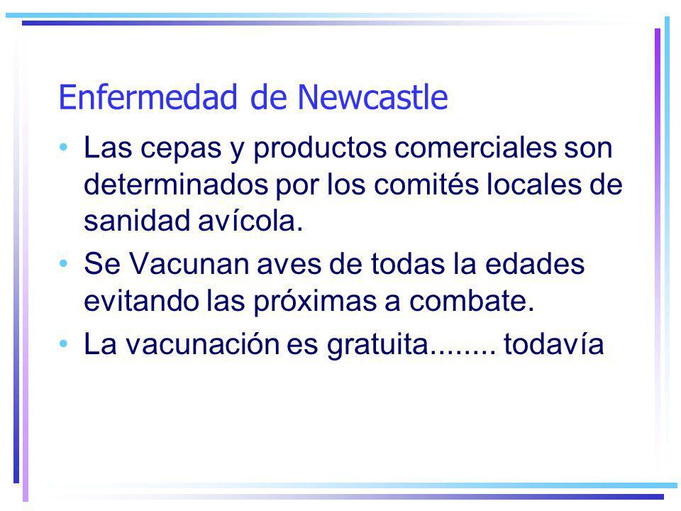 Enfermedad de Newcastle Las cepas y productos comerciales son determinados por los comités locales de sanidad avícola.