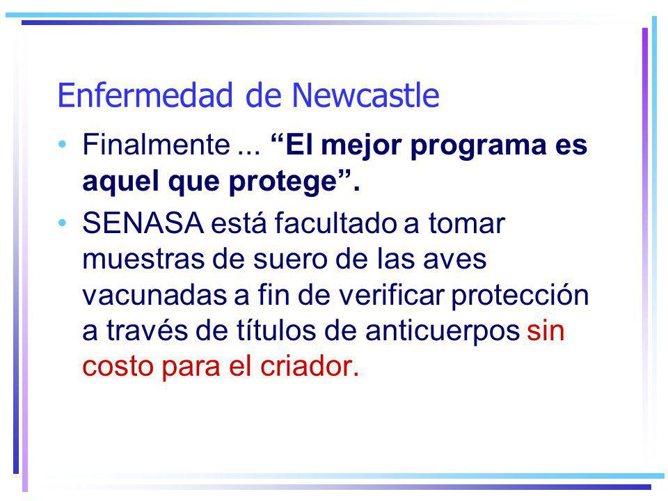 Enfermedad de Newcastle Finalmente...El mejor programa es aquel que protege.