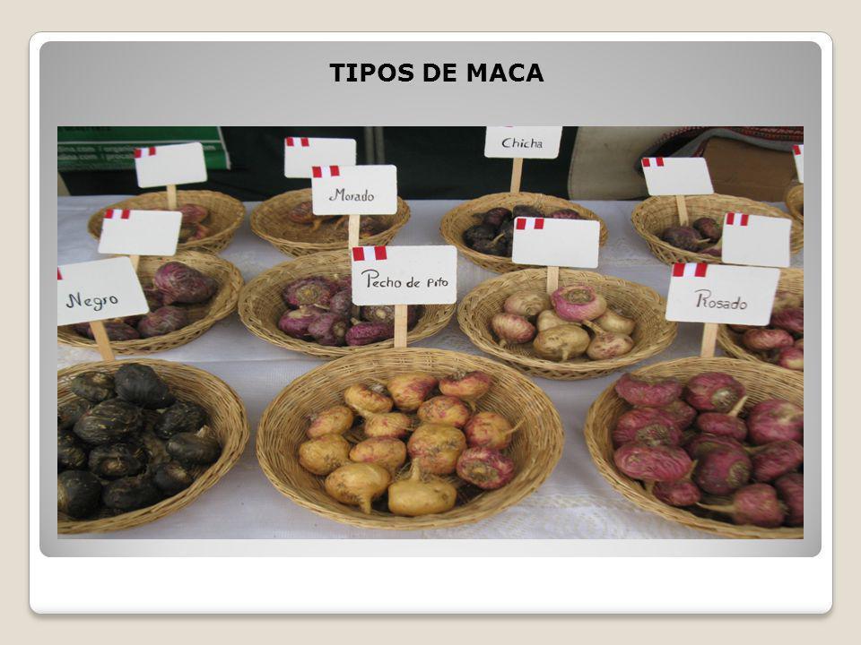 TIPOS DE MACA