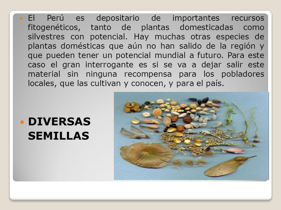 El Perú es depositario de importantes recursos fitogenéticos, tanto de plantas domesticadas como silvestres con potencial. Hay muchas otras especies d