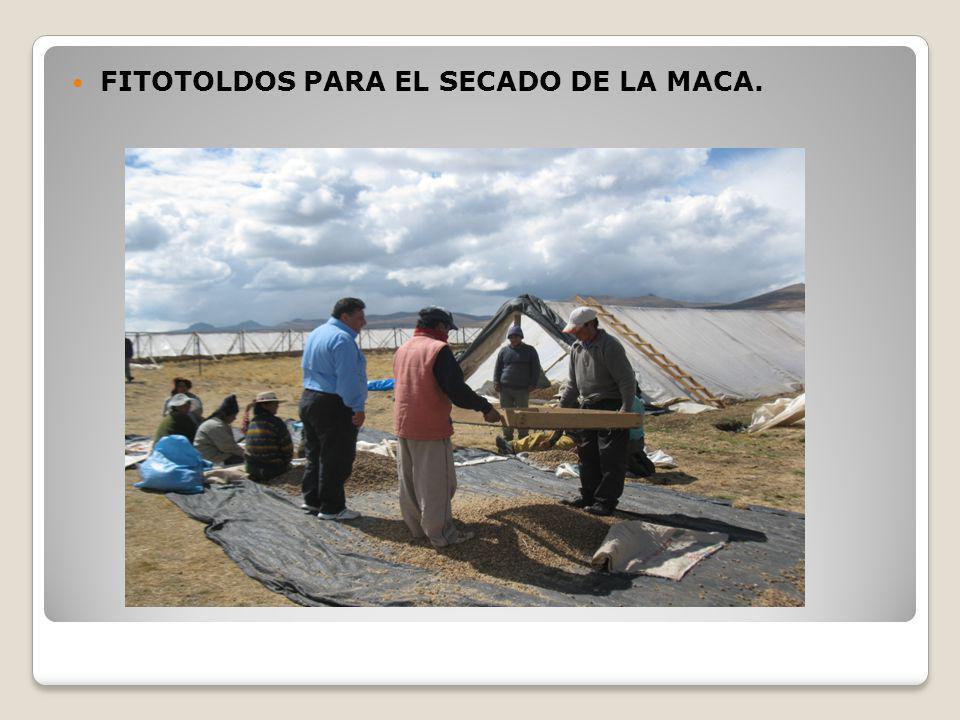 FITOTOLDOS PARA EL SECADO DE LA MACA.