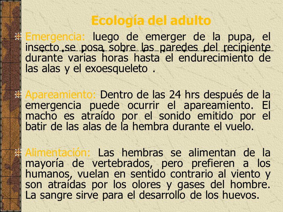 Ecología del adulto Emergencia: luego de emerger de la pupa, el insecto se posa sobre las paredes del recipiente durante varias horas hasta el endurec