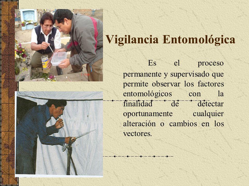 Vigilancia Entomológica Es el proceso permanente y supervisado que permite observar los factores entomológicos con la finalidad de detectar oportuname