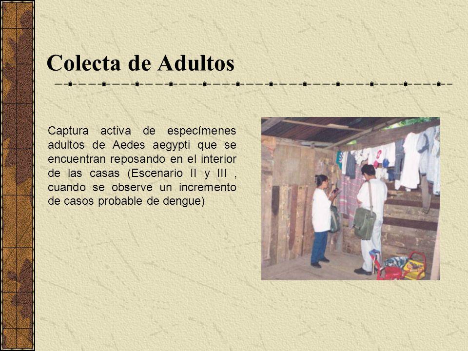 Colecta de Adultos Captura activa de especímenes adultos de Aedes aegypti que se encuentran reposando en el interior de las casas (Escenario II y III,