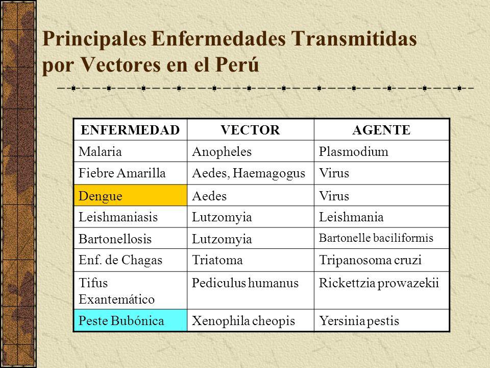 Principales Enfermedades Transmitidas por Vectores en el Perú ENFERMEDADVECTORAGENTE MalariaAnophelesPlasmodium Fiebre AmarillaAedes, HaemagogusVirus