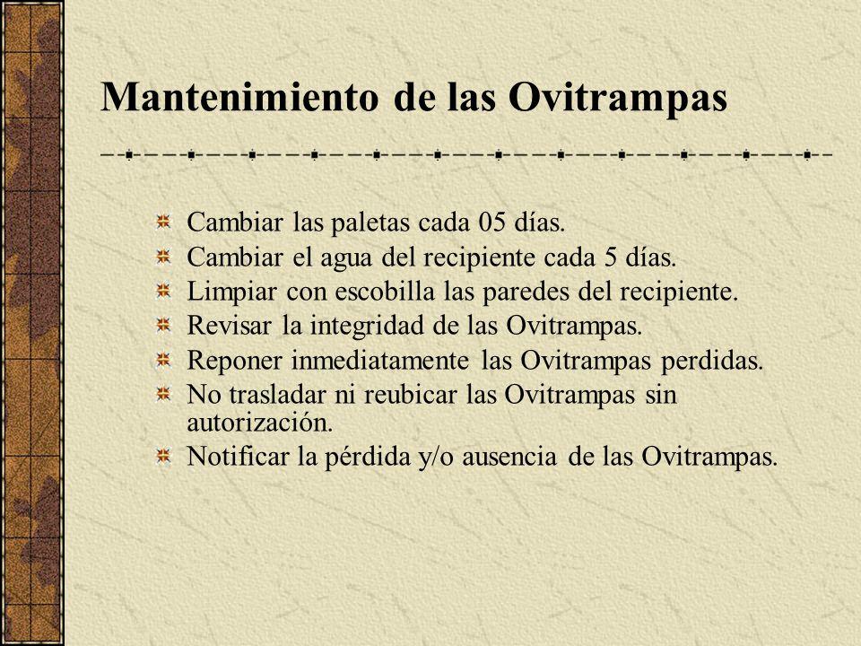 Mantenimiento de las Ovitrampas Cambiar las paletas cada 05 días. Cambiar el agua del recipiente cada 5 días. Limpiar con escobilla las paredes del re